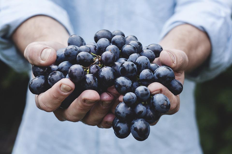 IFST updates its Information Statement on Organic Food - EFFoST